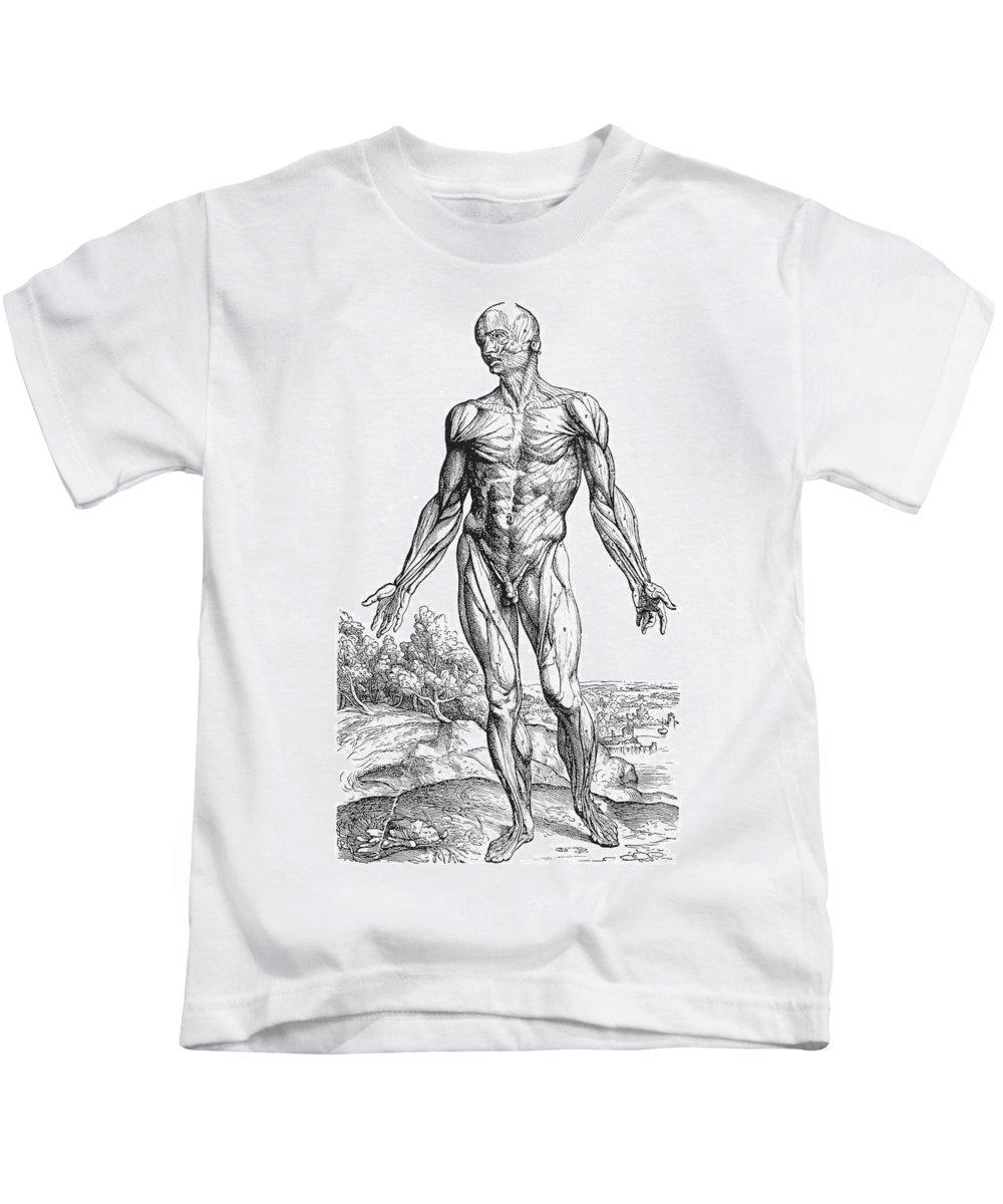 1543 Kids T-Shirt featuring the photograph Vesalius: Muscles, 1543 by Granger