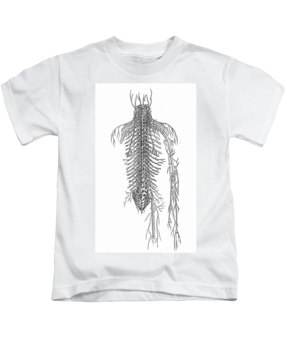 1543 Kids T-Shirt featuring the photograph Anatomy: Spinal Nerves by Granger