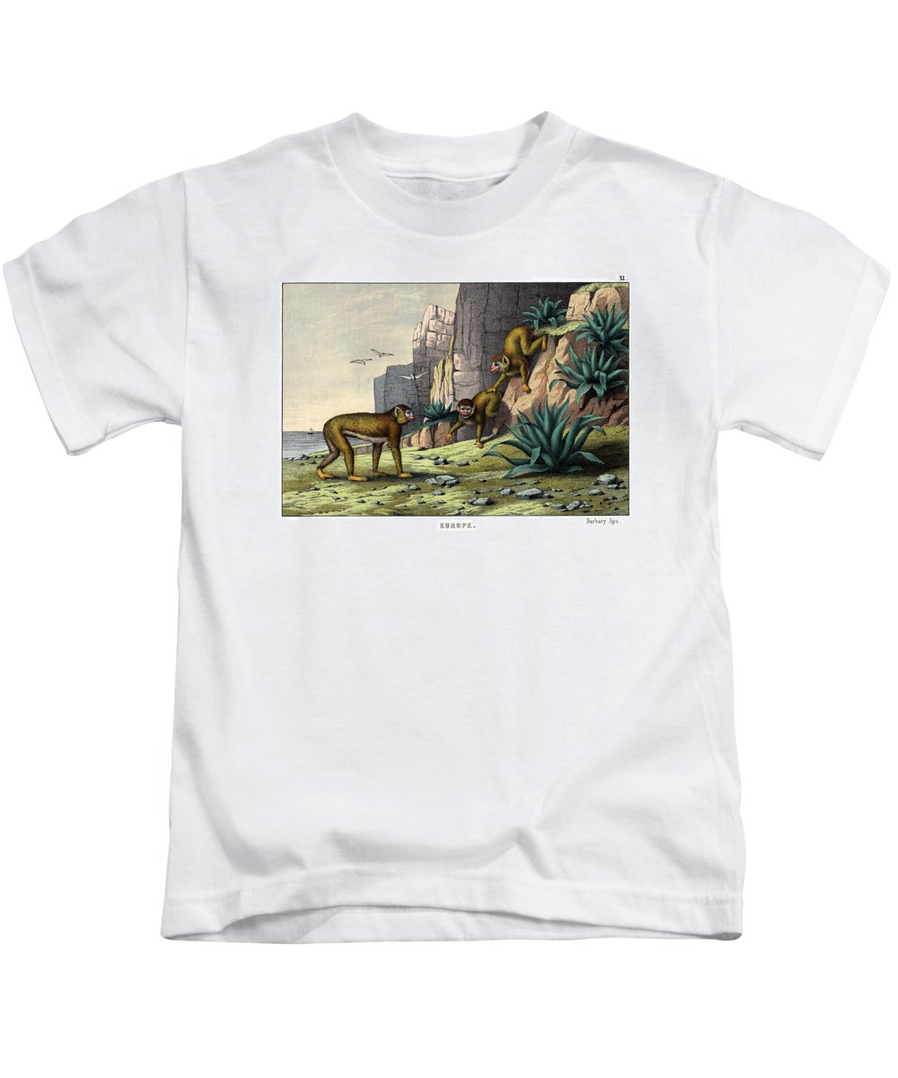 Wild Animals Kids T-Shirt featuring the drawing Barbary Ape by Splendid Art Prints