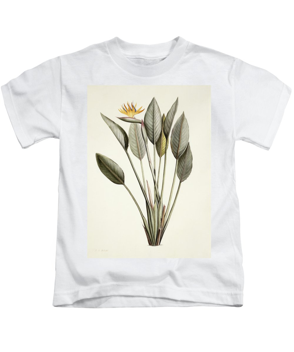 19th Century Kids T-Shirt featuring the painting Bird Of Paradise by Pierre Joseph Redoute