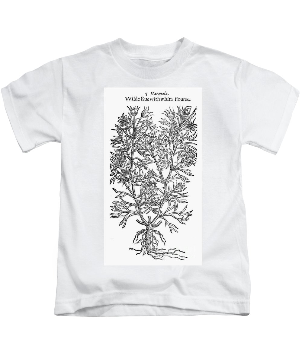 1597 Kids T-Shirt featuring the photograph Botany: African Rue, 1597 by Granger