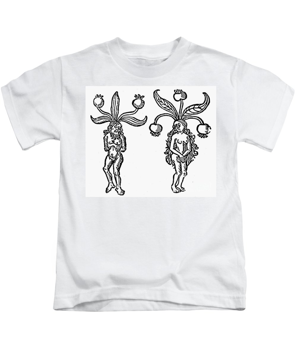 1476 Kids T-Shirt featuring the photograph Botany: Mandrake, 1476 by Granger