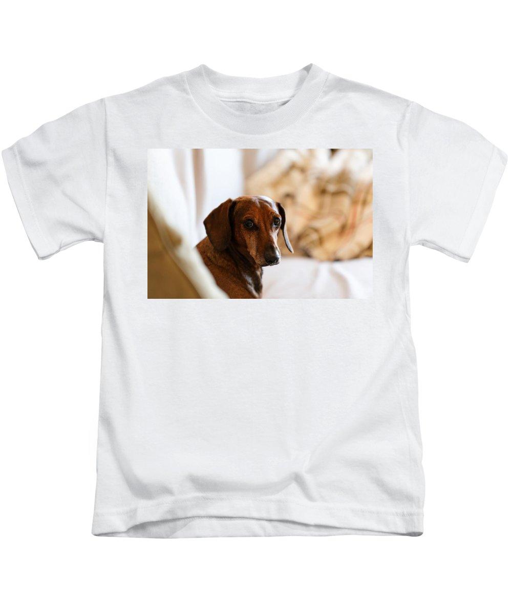 Dachshund Portraits Kids T-Shirt featuring the photograph Dachshund Portrait by Scott Hill