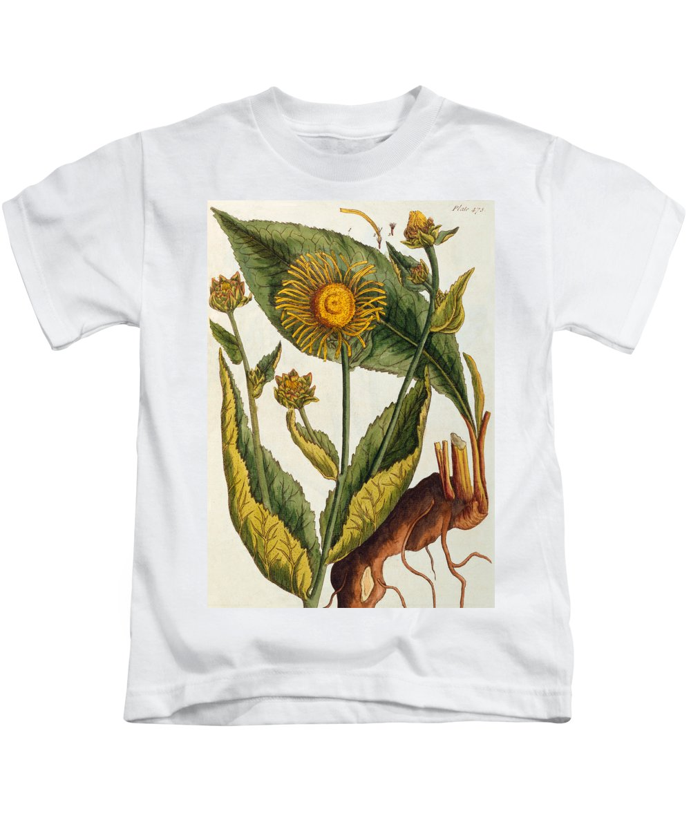 Still-life Kids T-Shirt featuring the painting Elecampane by Elizabeth Blackwell