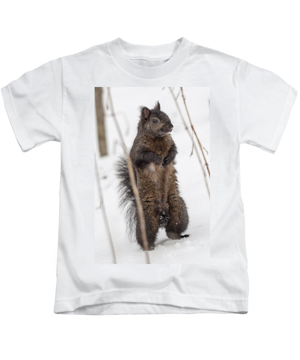 Squirrel Kids T-Shirt featuring the photograph I See You by Richard Kitchen