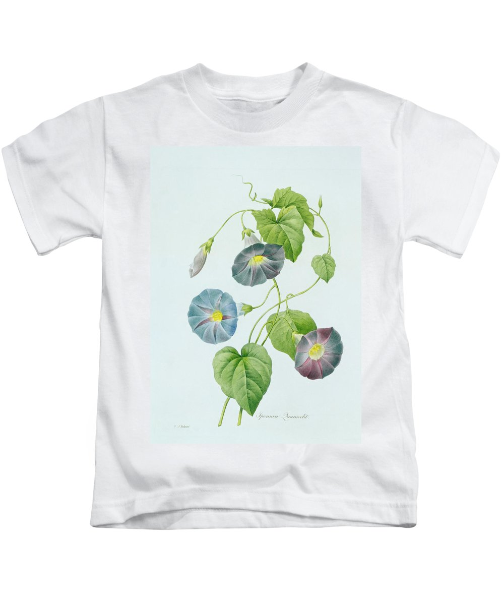 Ipomoea Violacea Kids T-Shirt featuring the painting Morning Glory by Pierre Joseph Redoute