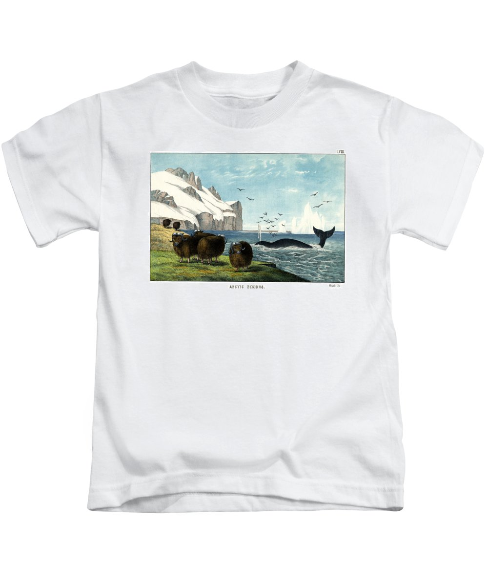Wild Animals Kids T-Shirt featuring the drawing Musk Ox by Splendid Art Prints