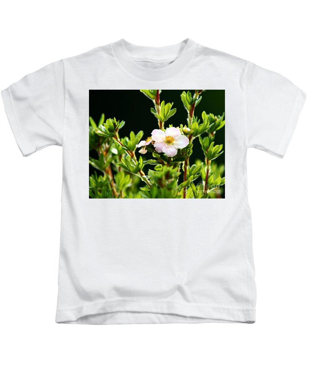 Potentilla Bush Kids T-Shirt featuring the photograph Potentilla by Anita Braconnier