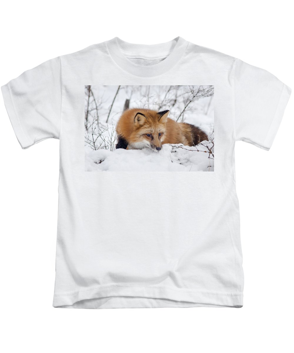 Red Fox Kids T-Shirt featuring the photograph Red Fox Making Dinner Plans by Jack Bell
