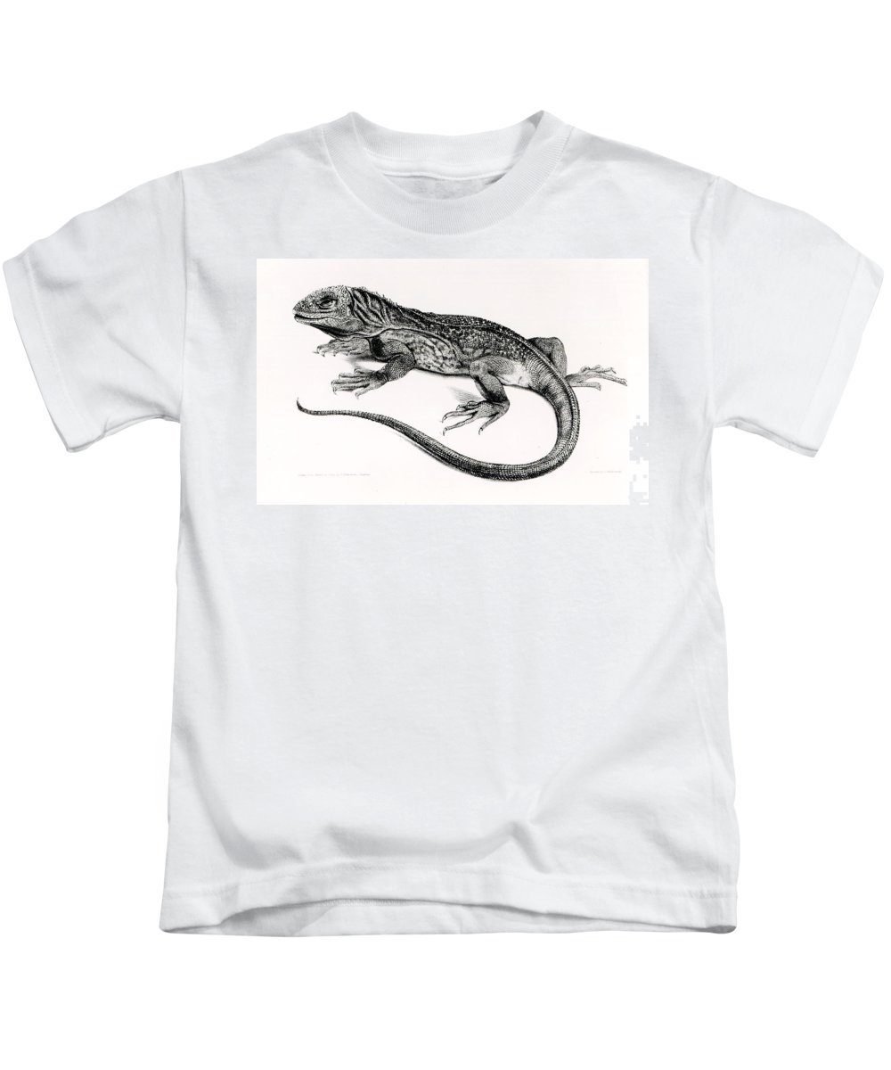 Lizard Kids T-Shirt featuring the painting Reptile by English School