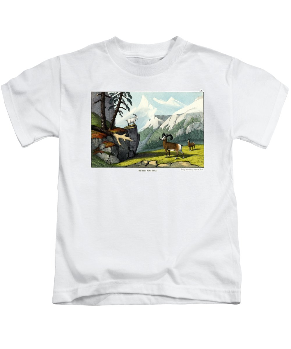Wild Animals Kids T-Shirt featuring the drawing Rocky Mountain Sheep by Splendid Art Prints