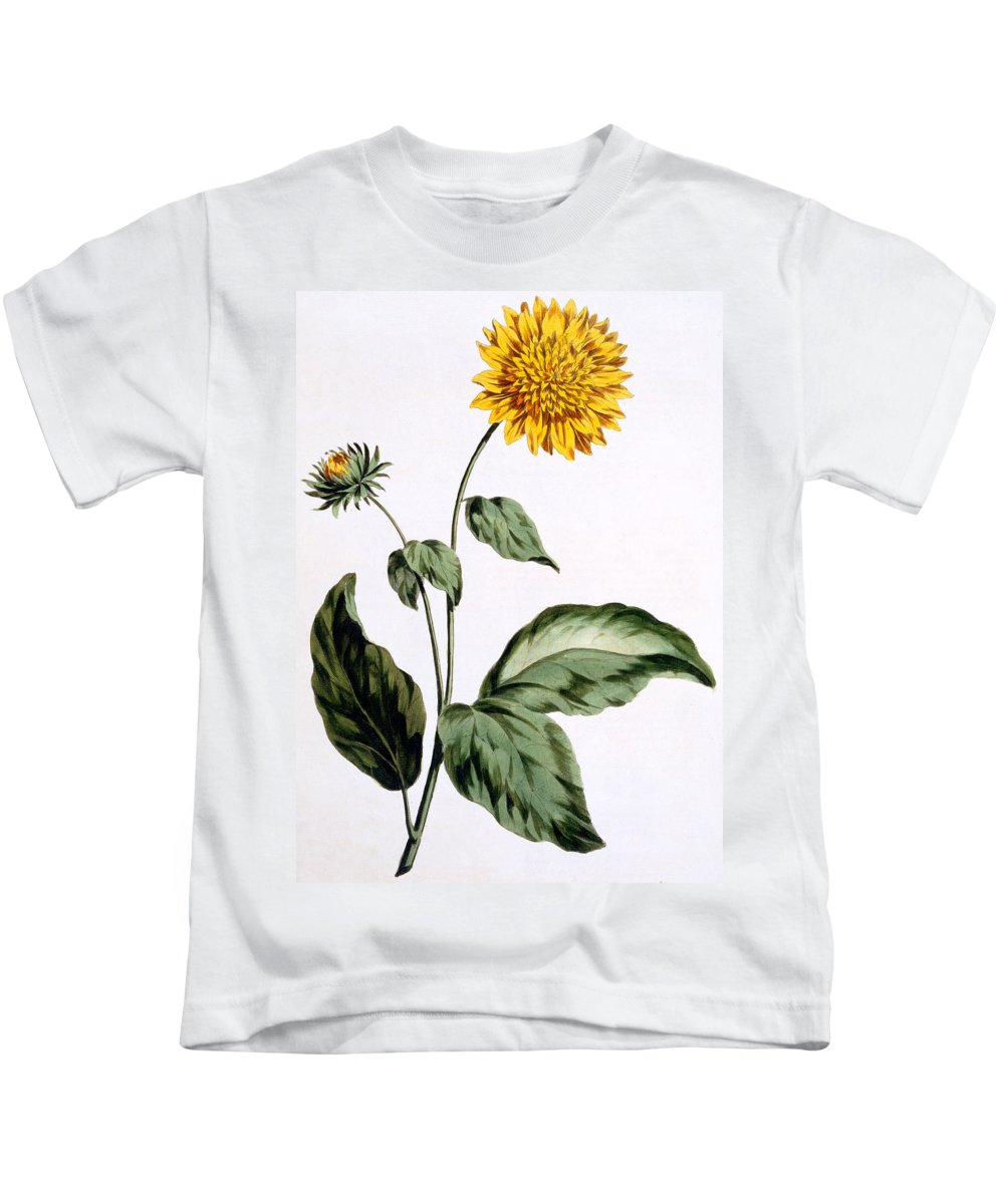 Still-life Kids T-Shirt featuring the painting Sunflower by John Edwards