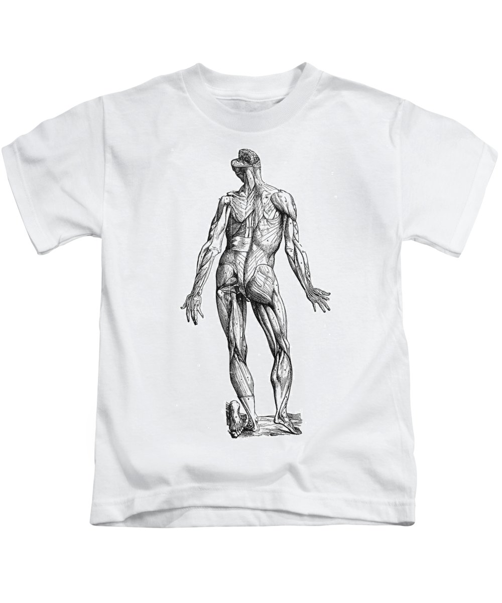1543 Kids T-Shirt featuring the photograph Vesalius: Muscles, 1543 by Granger