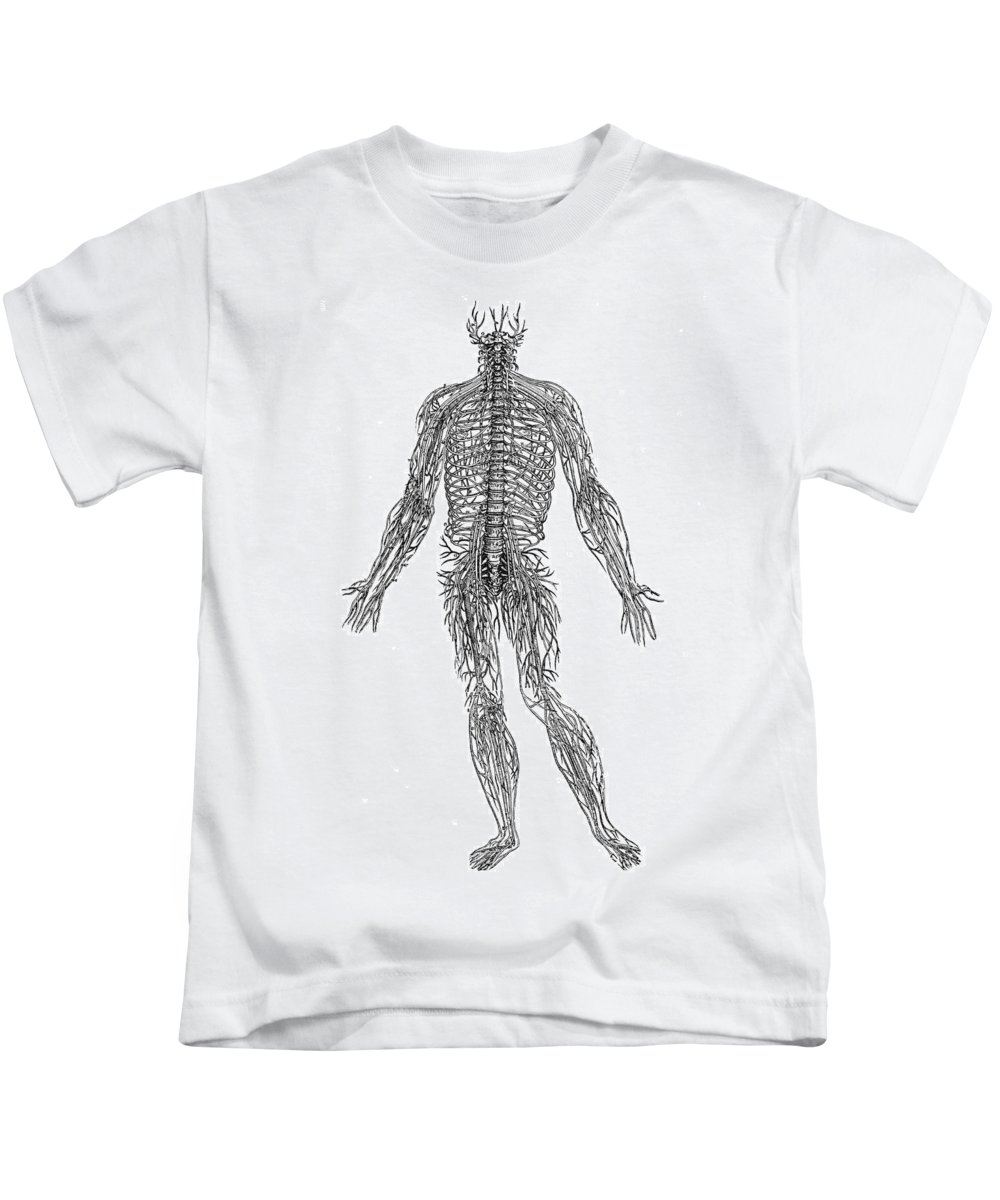 1543 Kids T-Shirt featuring the photograph Vesalius: Nerves, 1543 by Granger