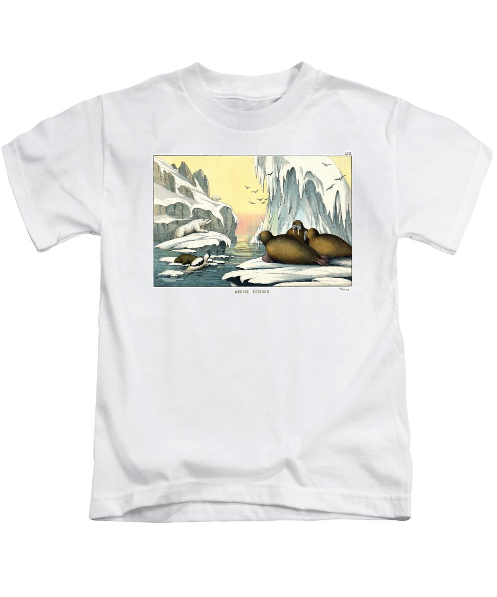 Wild Animals Kids T-Shirt featuring the drawing Walrus by Splendid Art Prints