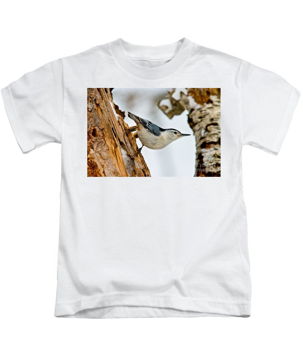 White-breasted Nuthatch Kids T-Shirt featuring the photograph White-breasted Nuthatch Pictures 97 by World Wildlife Photography