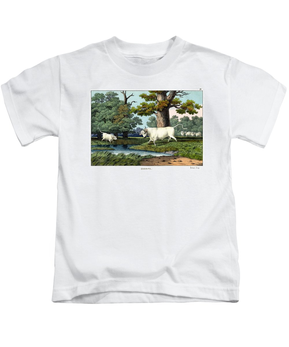Wild Animals Kids T-Shirt featuring the drawing Wild Cattle Of Britain by Splendid Art Prints