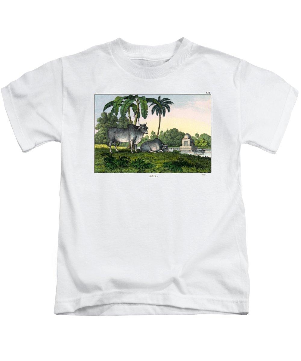 Wild Animals Kids T-Shirt featuring the drawing Zebu by Splendid Art Prints