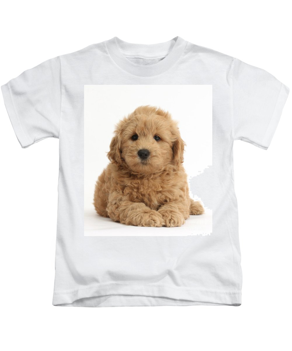 Nature Kids T-Shirt featuring the photograph Goldendoodle Puppy by Mark Taylor