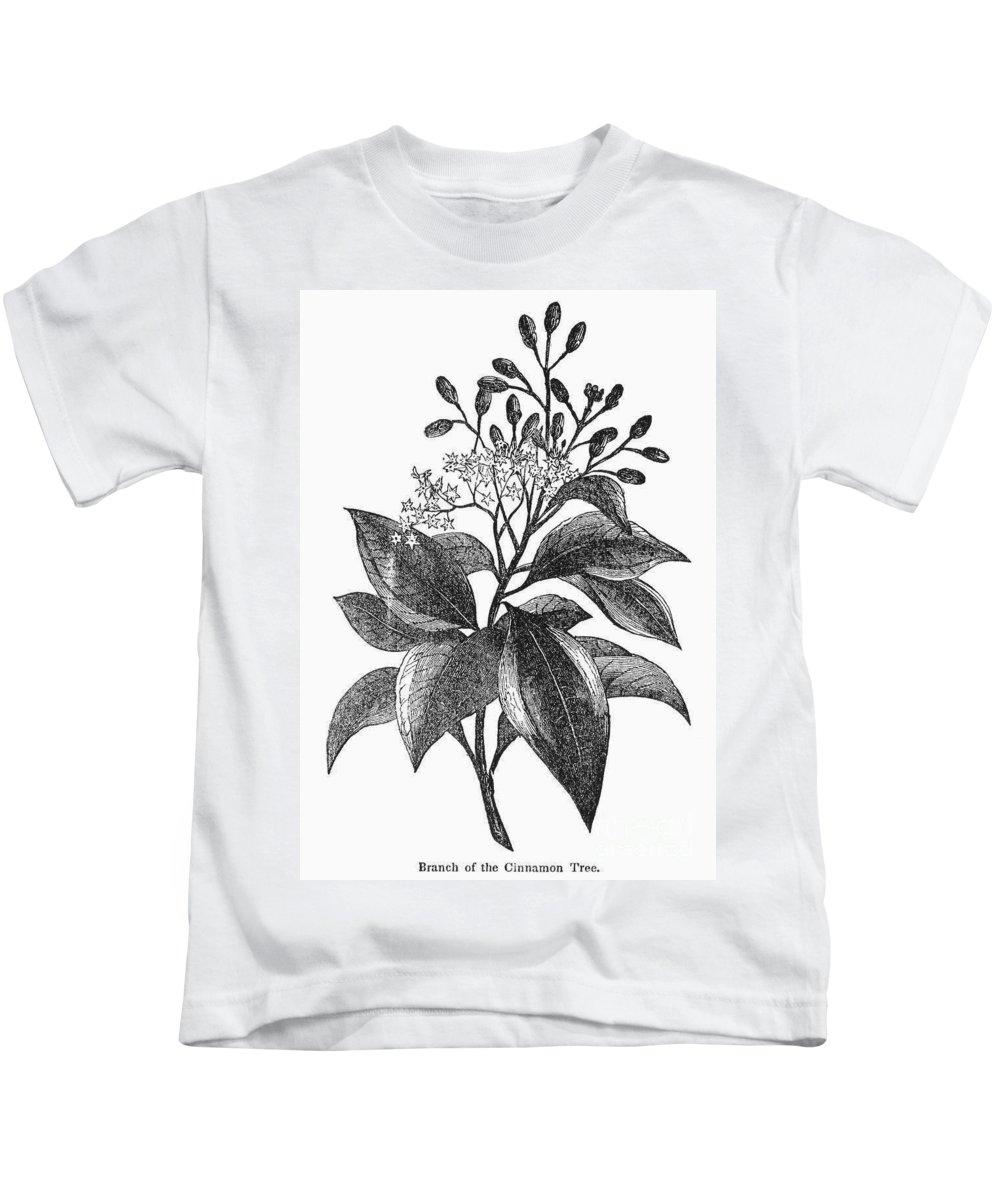 Biology Kids T-Shirt featuring the photograph Botany: Cinnamon Tree by Granger