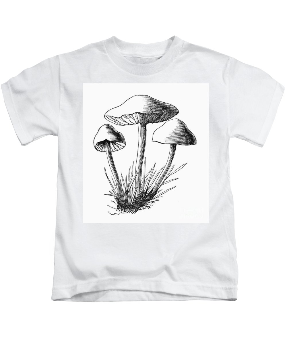 1875 Kids T-Shirt featuring the photograph Botany: Mushroom by Granger