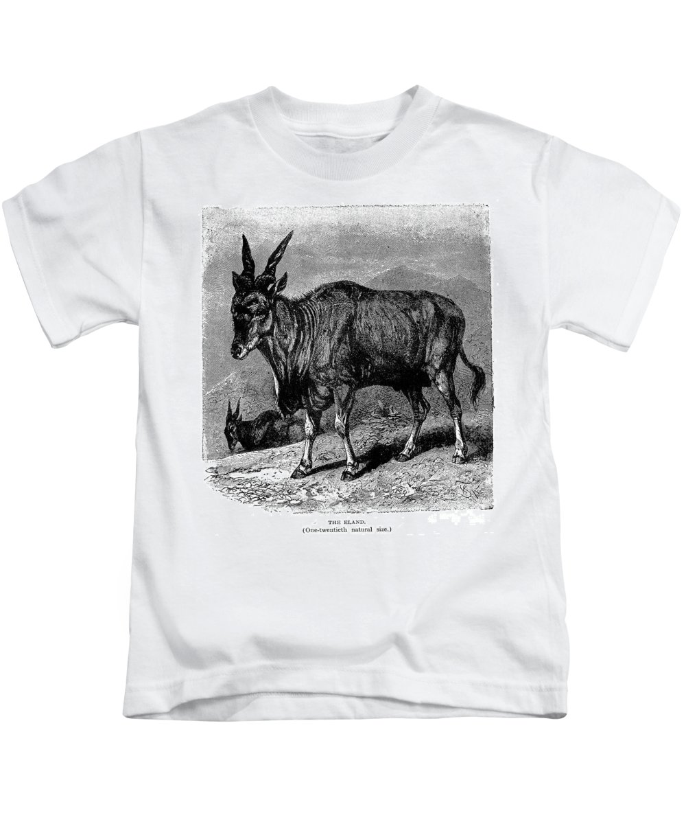 19th Century Kids T-Shirt featuring the photograph Eland by Granger