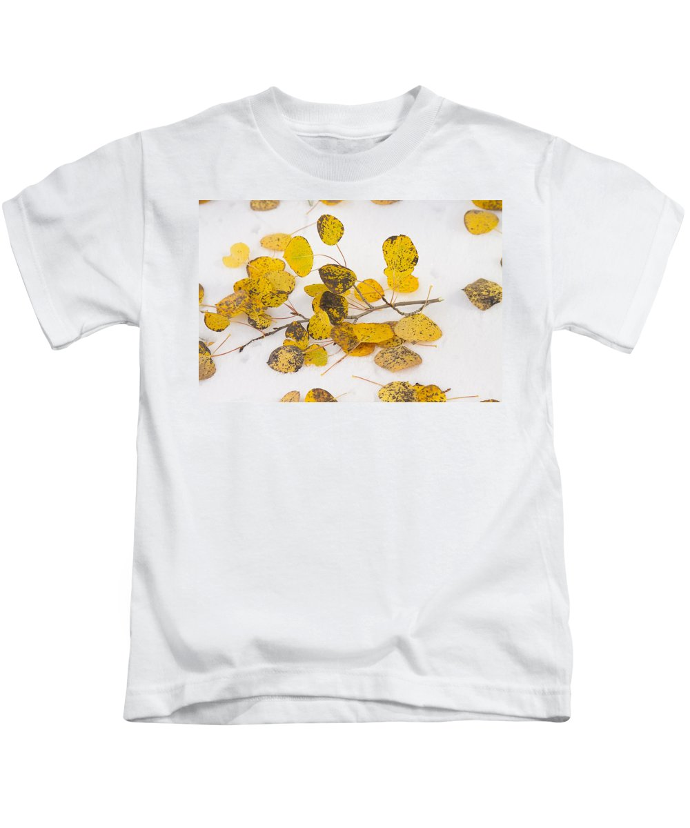 Snow Kids T-Shirt featuring the photograph Fallen Autumn Aspen Leaves by James BO Insogna