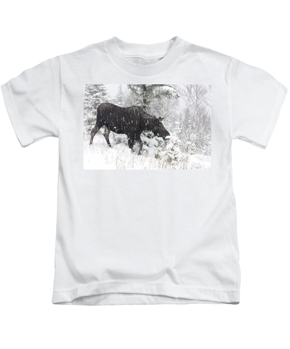 Canada Kids T-Shirt featuring the photograph Female Moose In Snowy Forest, Gaspesie by Philippe Henry