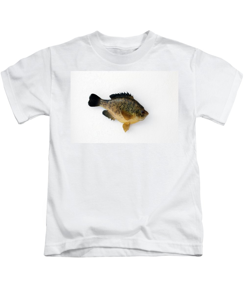Animals Kids T-Shirt featuring the photograph Fish Mount Set 08 A by Thomas Woolworth