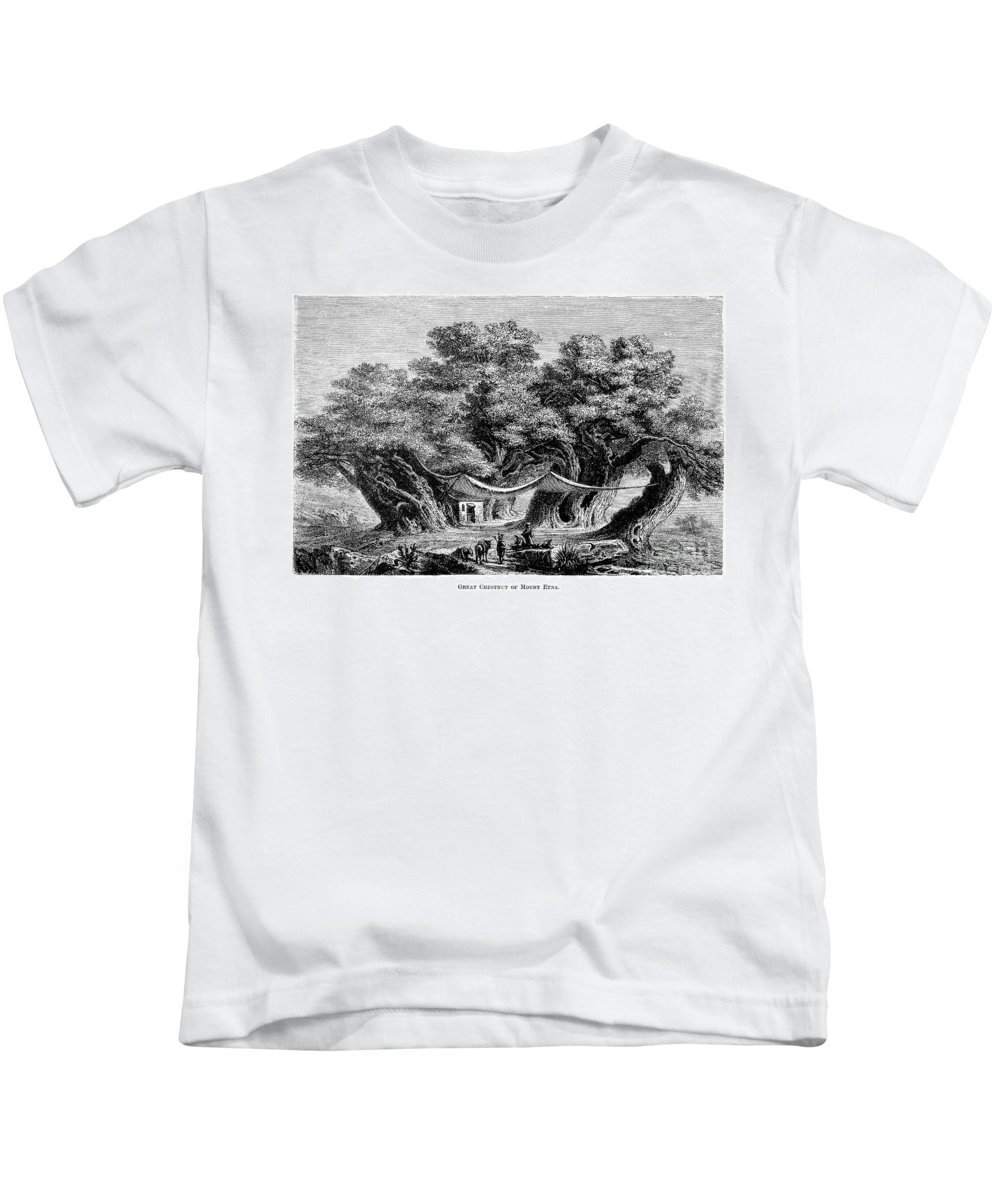 1873 Kids T-Shirt featuring the photograph Great Chestnut Tree by Granger