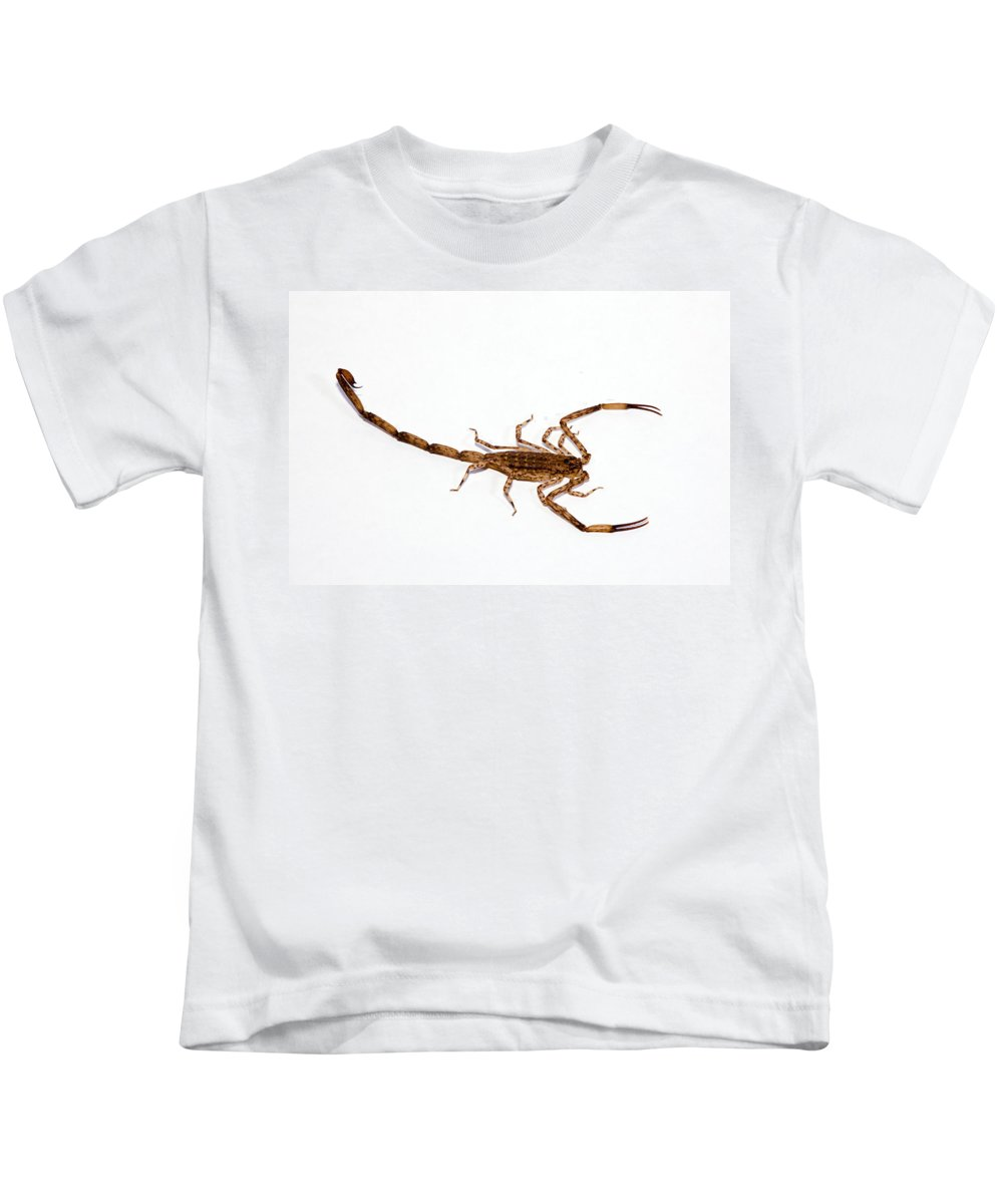 Aggressive Kids T-Shirt featuring the photograph Lesser Brown Scorpion by Dave Fleetham