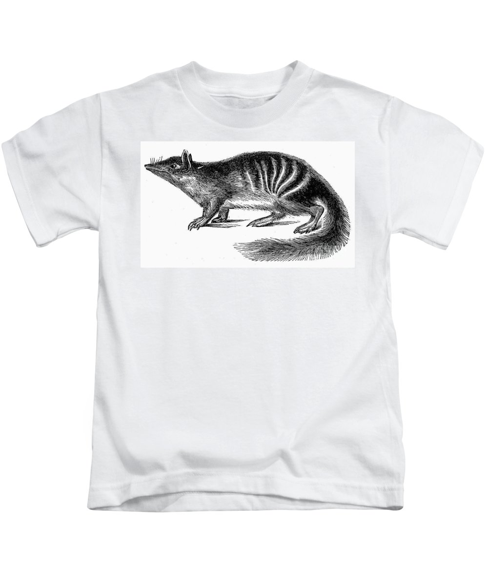 19th Century Kids T-Shirt featuring the photograph Numbat by Granger