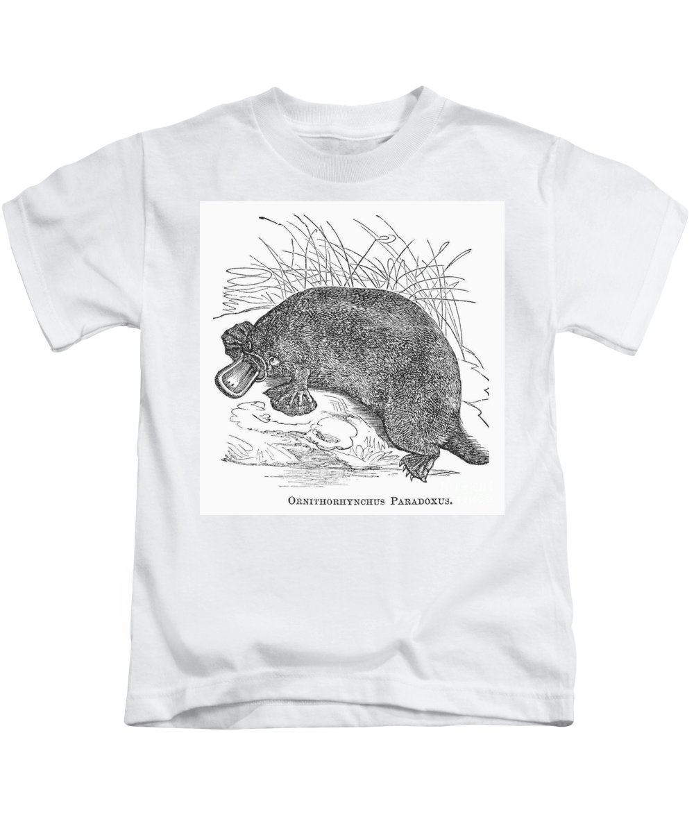 19th Century Kids T-Shirt featuring the photograph Platypus by Granger