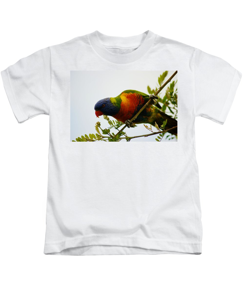 Kathryn Potempski Kids T-Shirt featuring the photograph Rosella Splendour by Kathryn Potempski