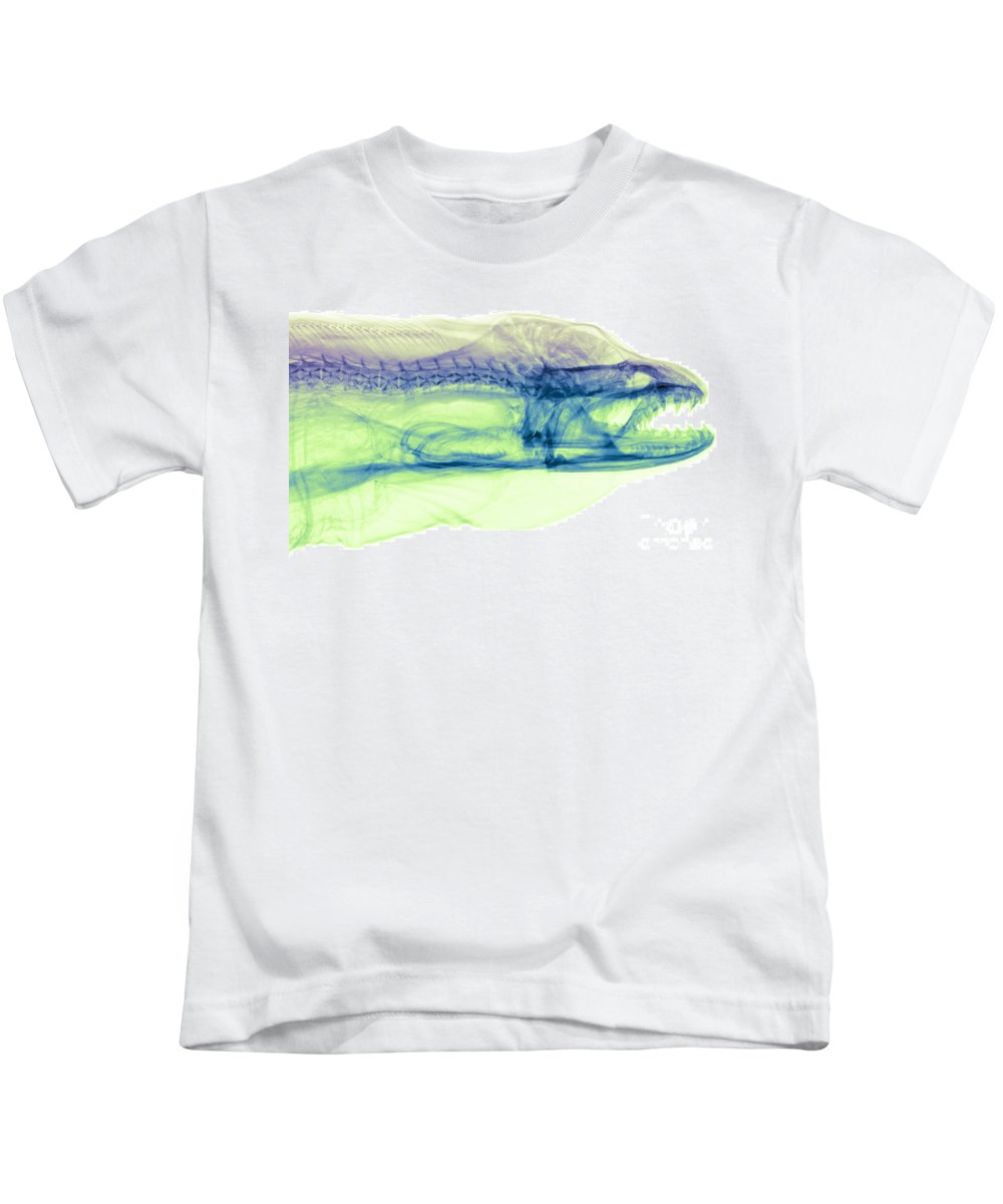 Science Kids T-Shirt featuring the photograph Moray Eel, Gymnothorax Funebris, X-ray by Ted Kinsman