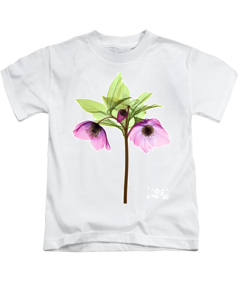 Science Kids T-Shirt featuring the photograph Hellebore Flowers, X-ray by Ted Kinsman