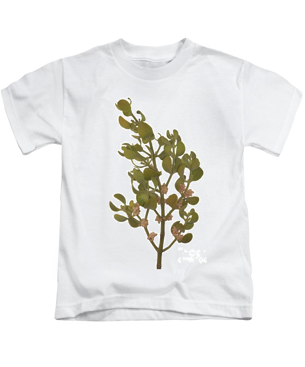 Pacific Mistletoe Kids T-Shirt featuring the photograph Pacific Mistletoe by Ted Kinsman