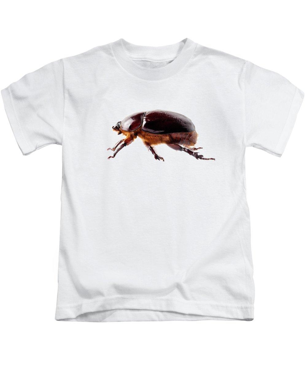 Animal Kids T-Shirt featuring the painting European Rhinoceros Beetle Female by Pablo Romero
