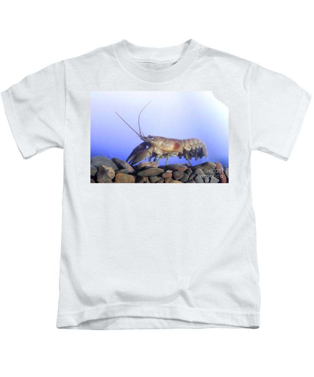 Fauna Kids T-Shirt featuring the photograph Female Rusty Crayfish by Ted Kinsman