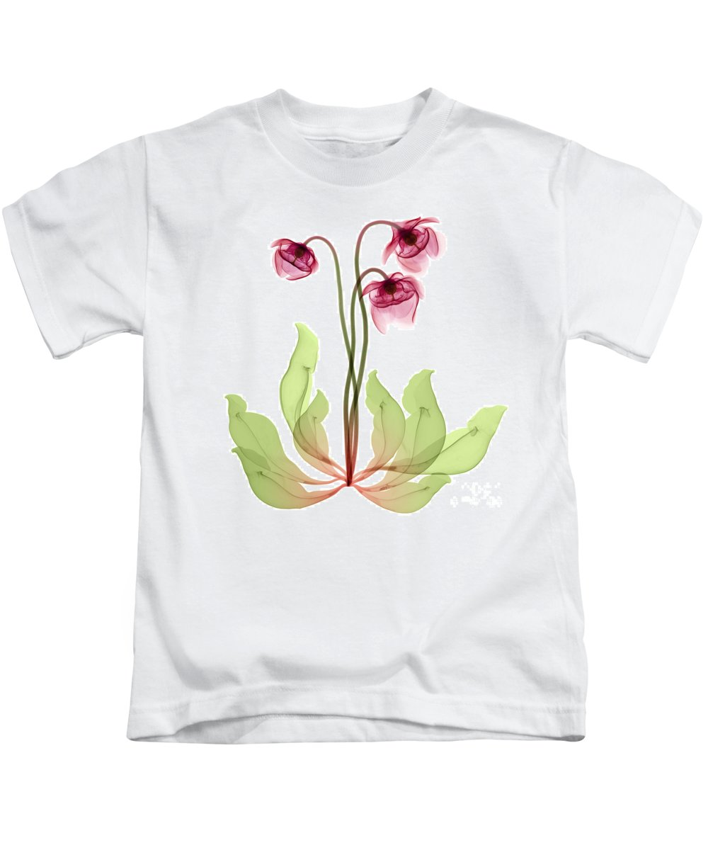 Science Kids T-Shirt featuring the photograph Pitcher Plant Flowers, X-ray by Ted Kinsman