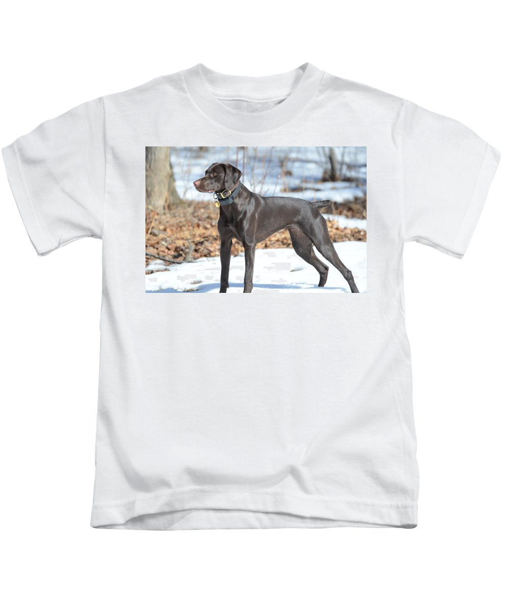 German Shorthaired Pointer Kids T-Shirt featuring the photograph Alert by Tammy Mutka