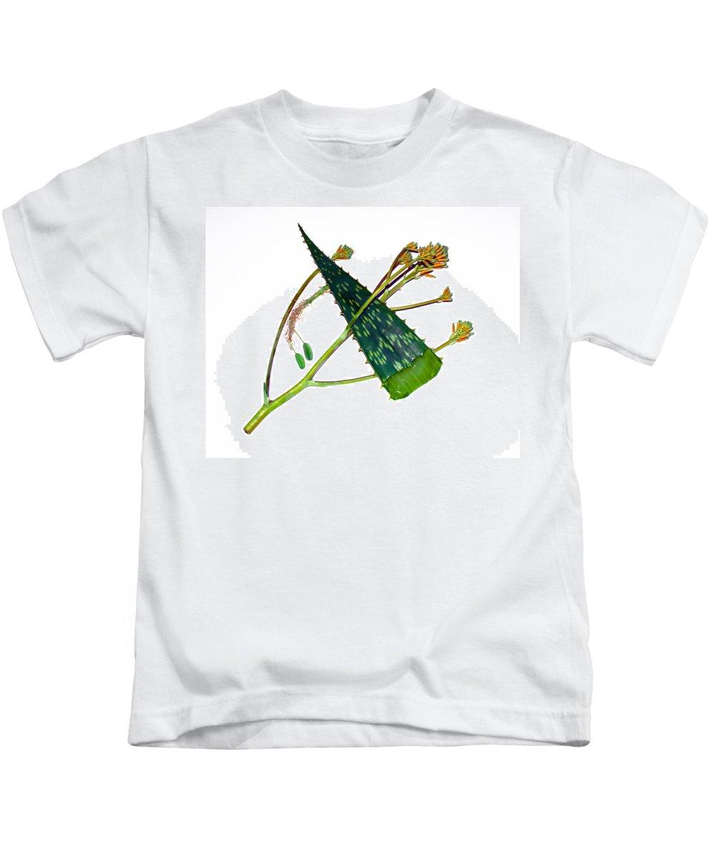 Aloe; Vera; Medicine; Properties; Medicinal; Ailments; Biblical; Ointment; Burns; Burn; Cuts; Rash; Kids T-Shirt featuring the photograph Aloe Vera by Allan Hughes
