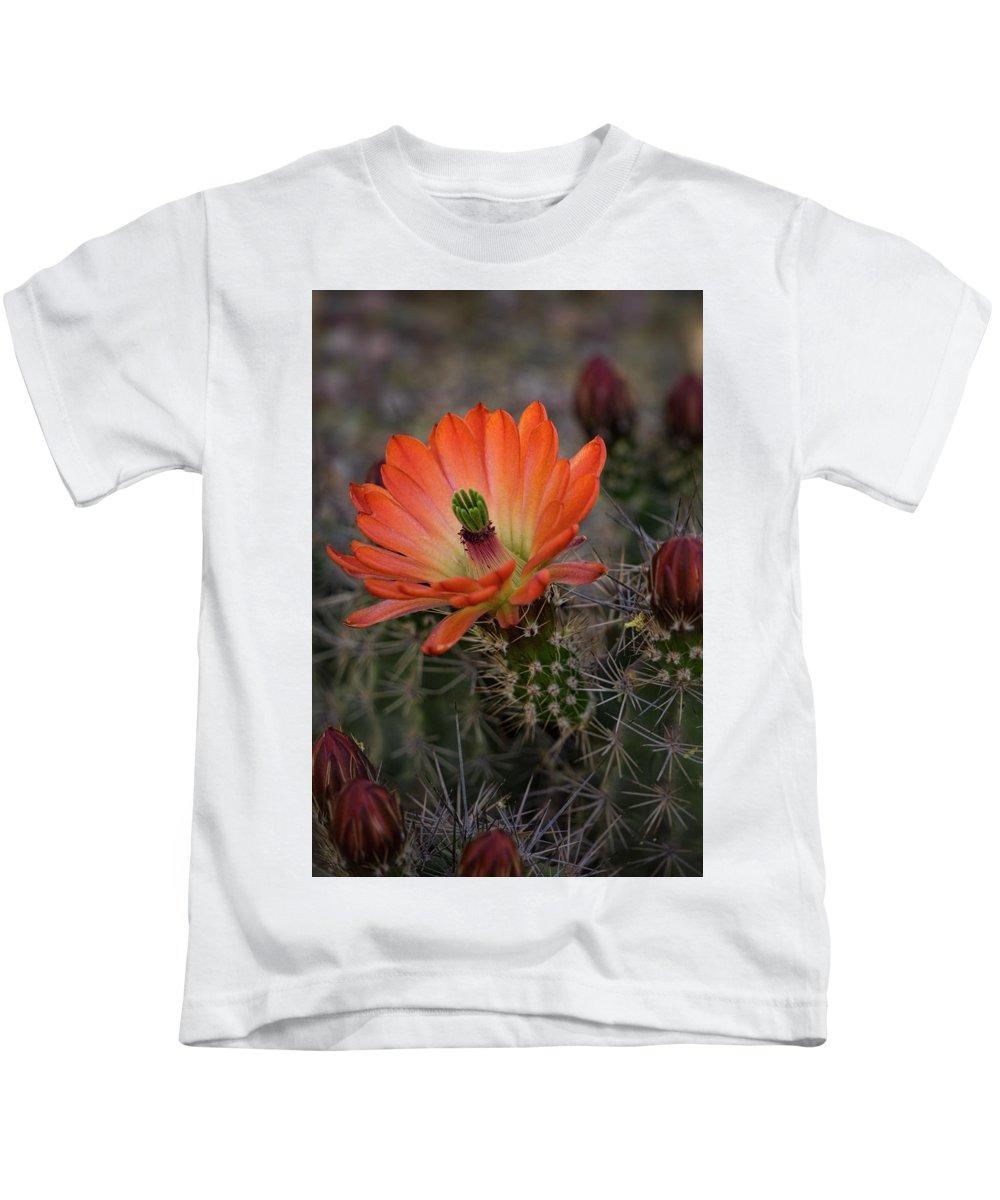Arizona Kids T-Shirt featuring the photograph An Orange Beauty Of A Hedgehog by Saija Lehtonen
