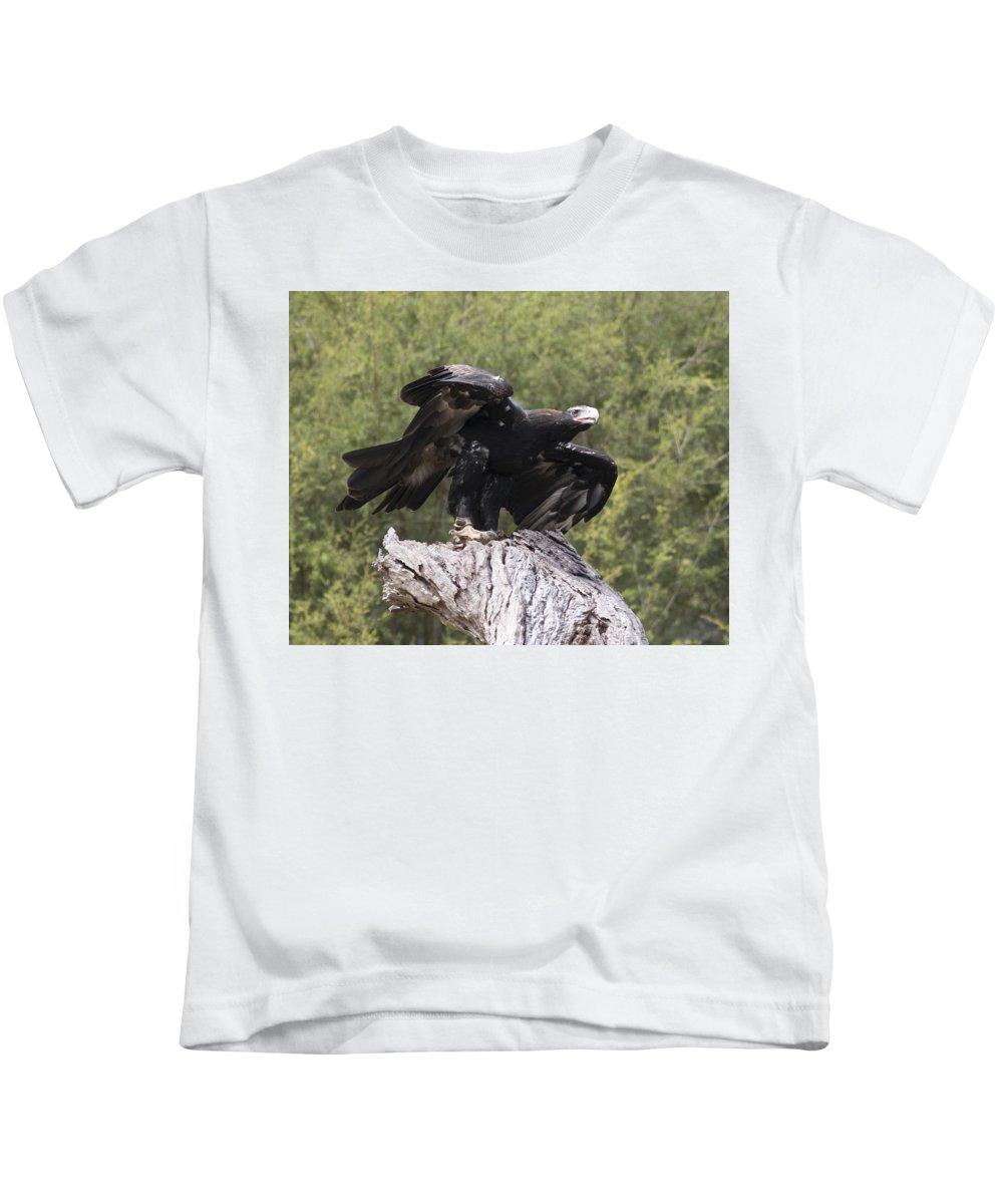 Bird Of Prey Kids T-Shirt featuring the photograph Black Kite by Masami Iida