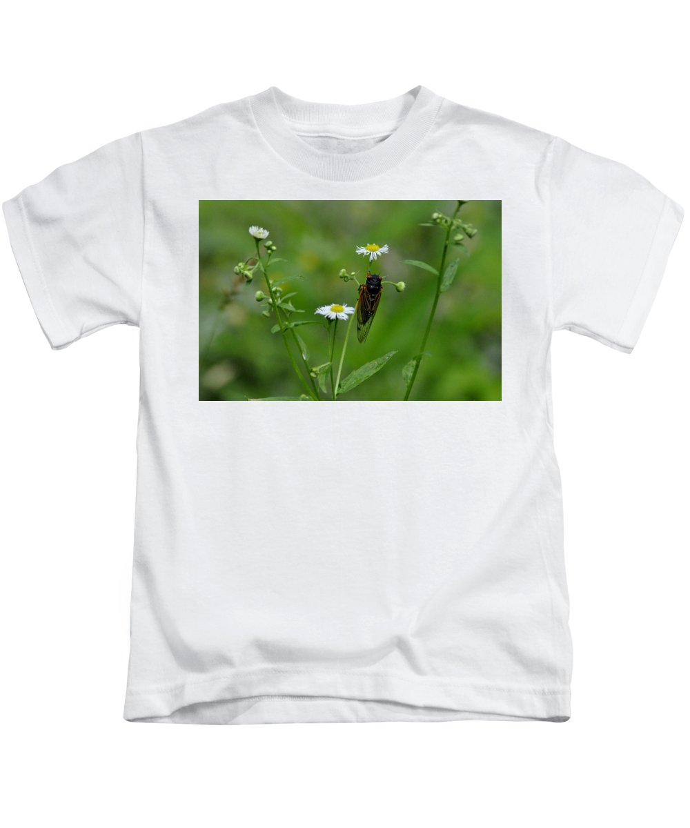 Cicada Kids T-Shirt featuring the photograph Cicada by David Kelso
