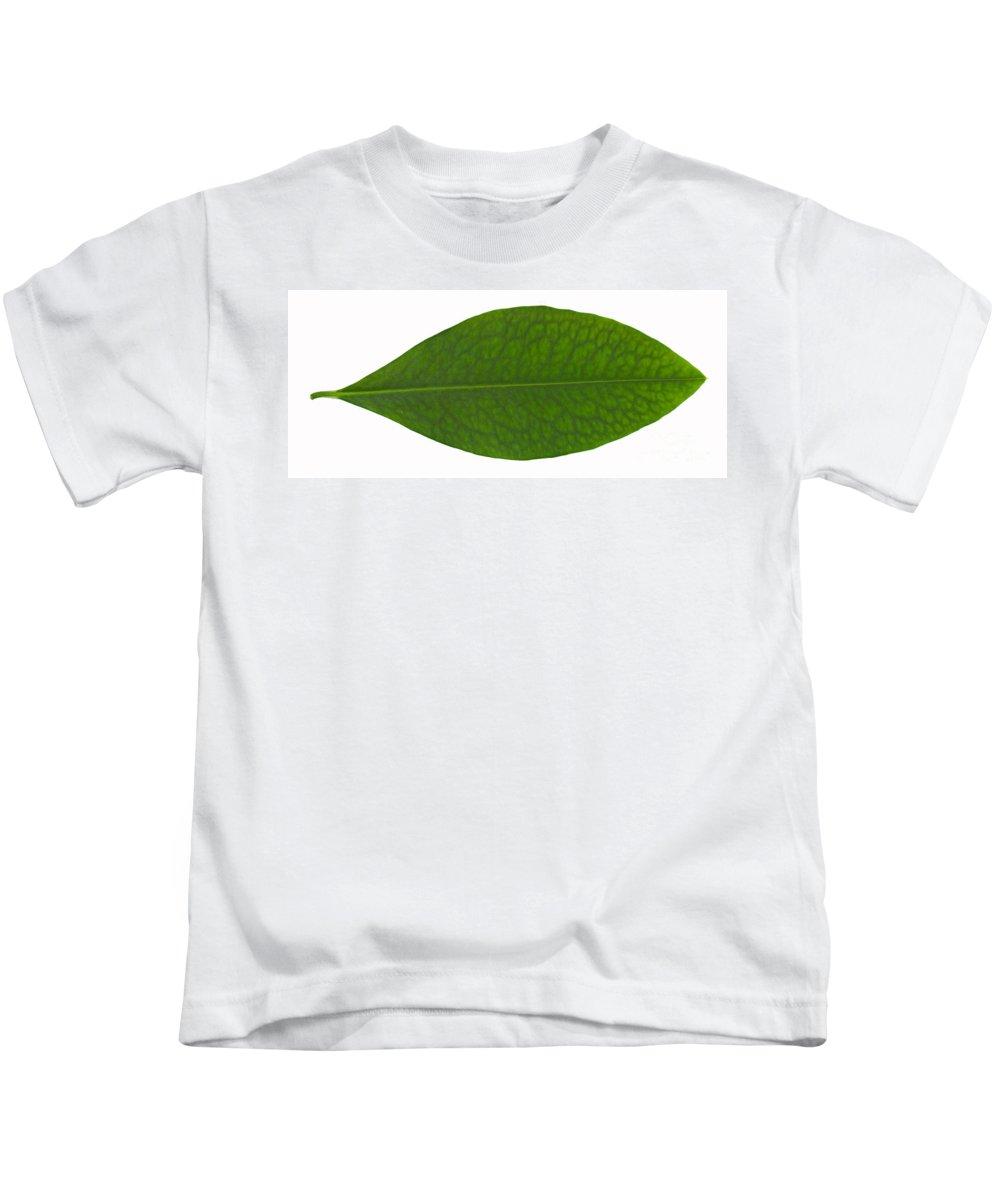 Erythroxylon Coca Kids T-Shirt featuring the photograph Coca Leaf, Erythroxylon Coca by Ted Kinsman