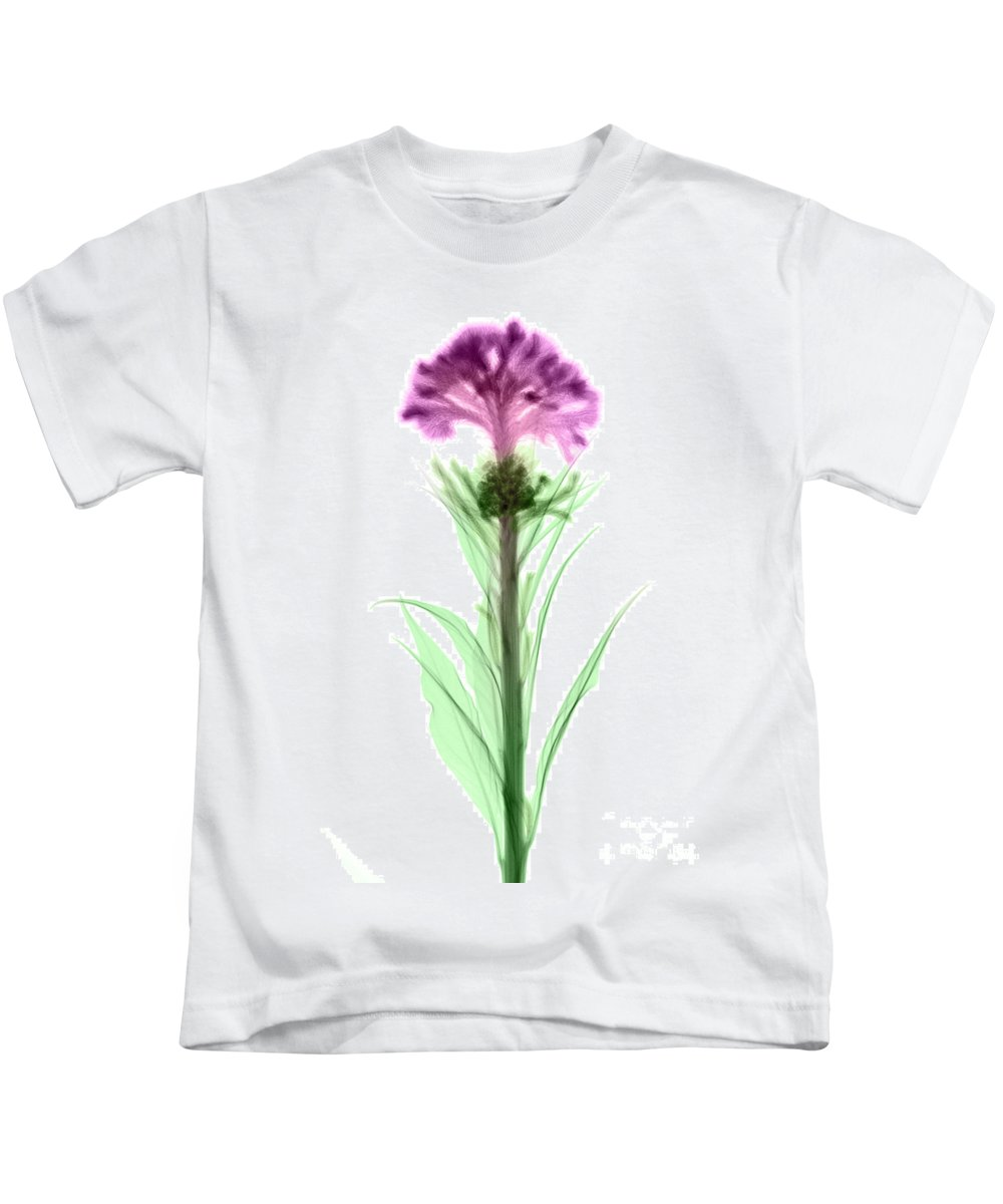 Science Kids T-Shirt featuring the photograph Cockscombs Flower, X-ray by Ted Kinsman