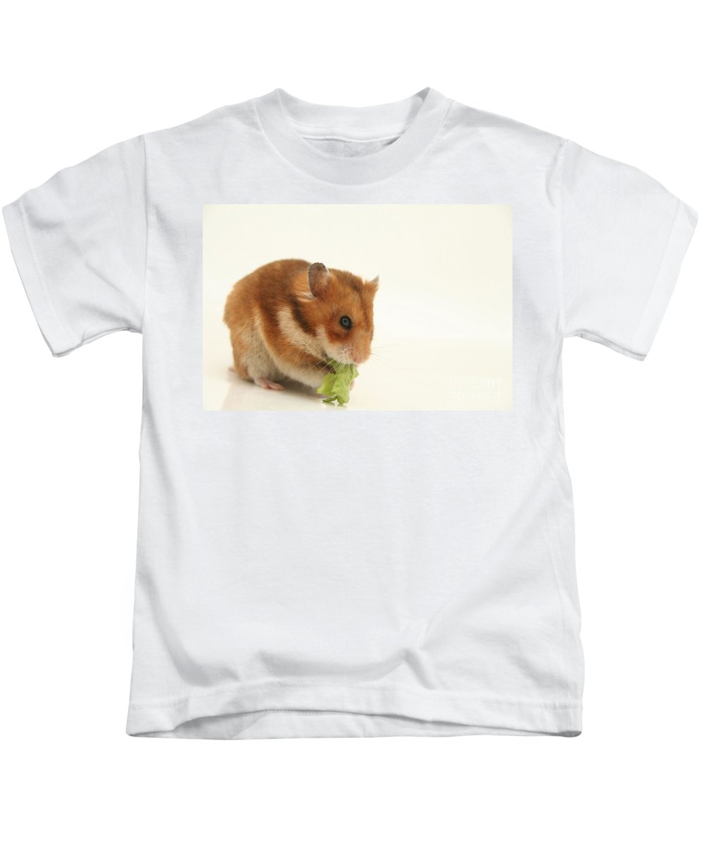 Hamster Kids T-Shirt featuring the photograph Curious Hamster by Yedidya yos mizrachi