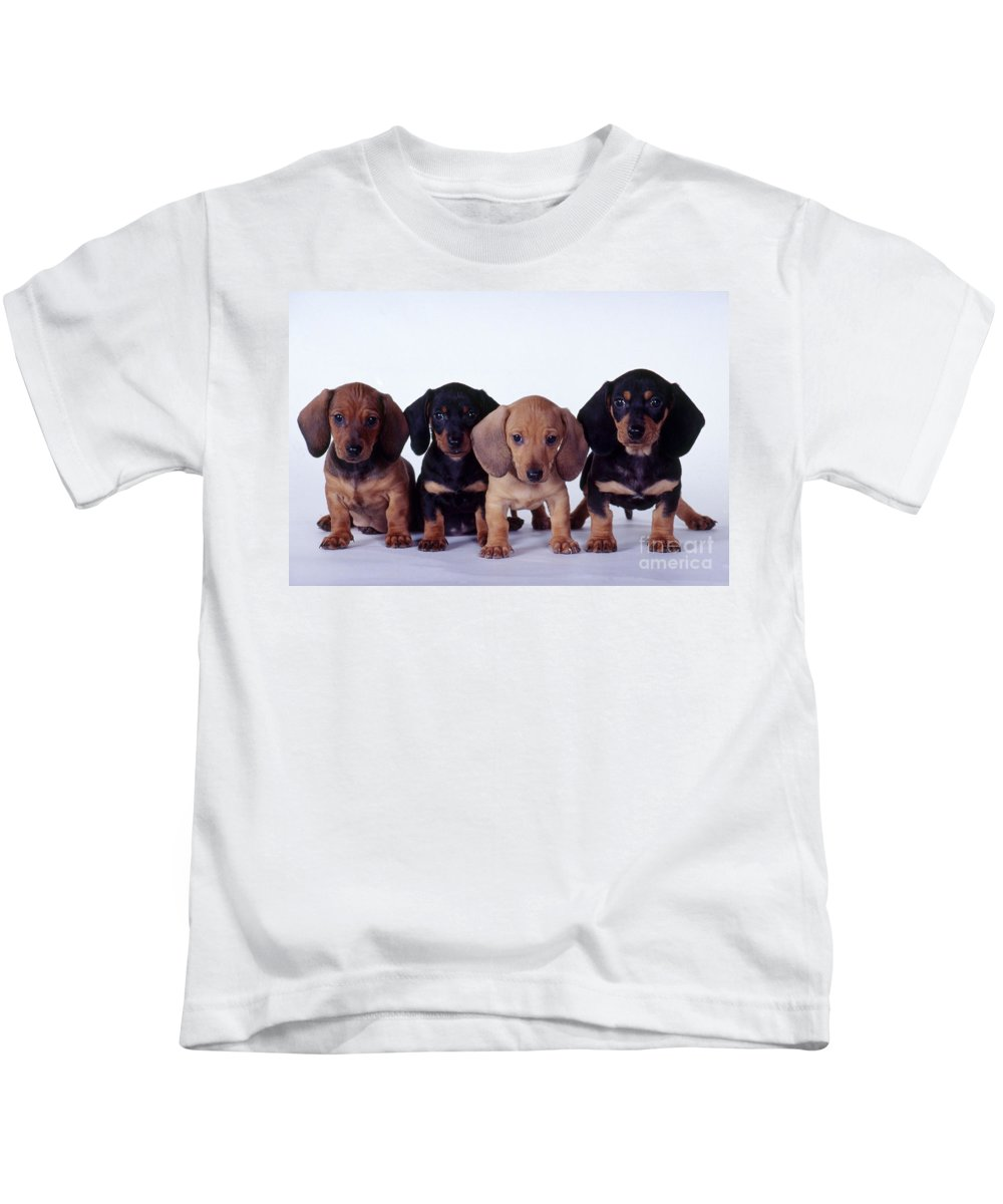 Fauna Kids T-Shirt featuring the photograph Dachshund Puppies by Carolyn McKeone and Photo Researchers