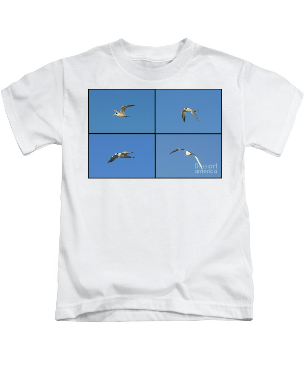 Royal Tern Kids T-Shirt featuring the photograph Flight Of The Tern Collage by William Tasker